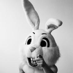Nie królik, nie tym razem